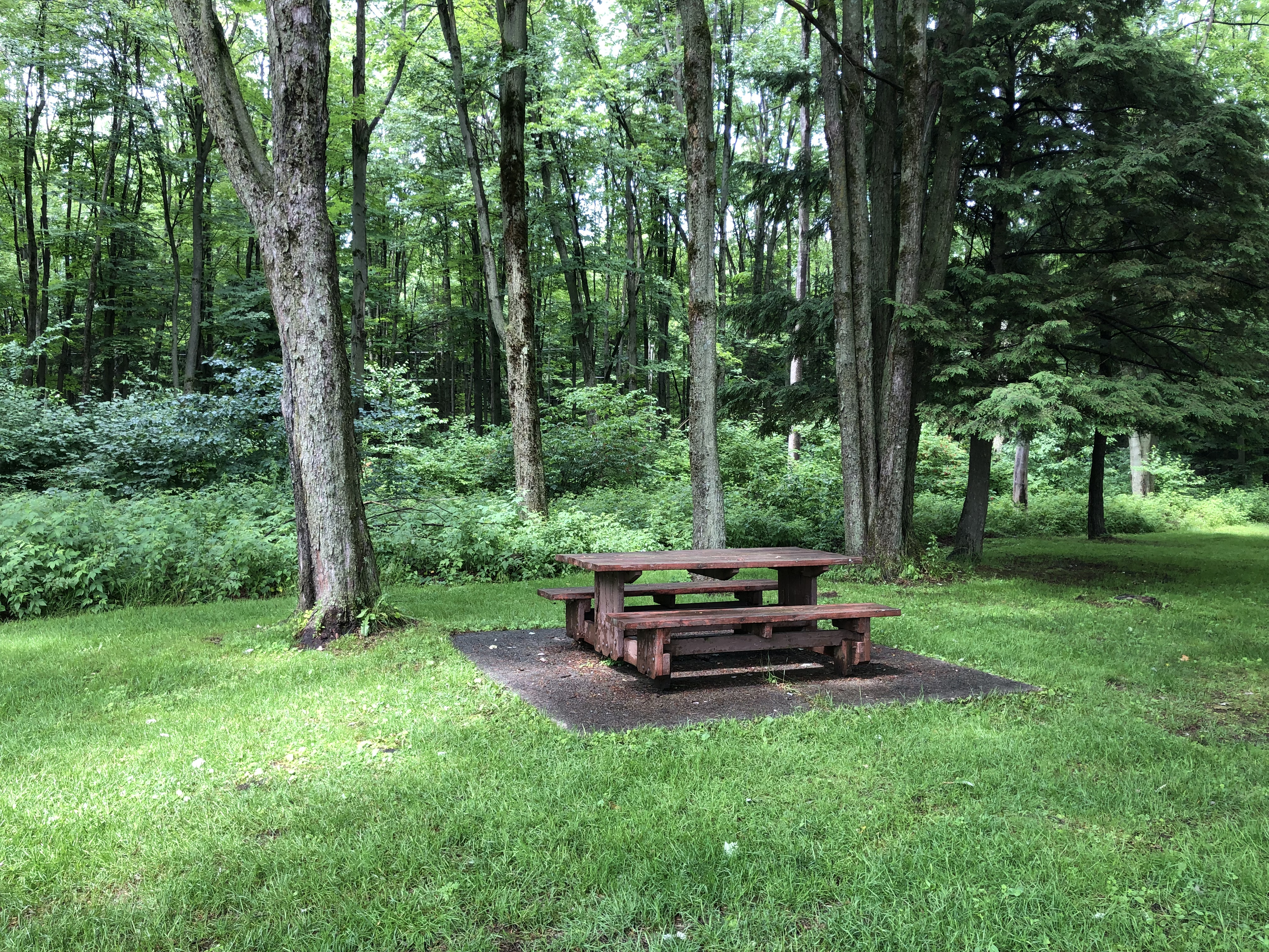 empty park bench with forest in back