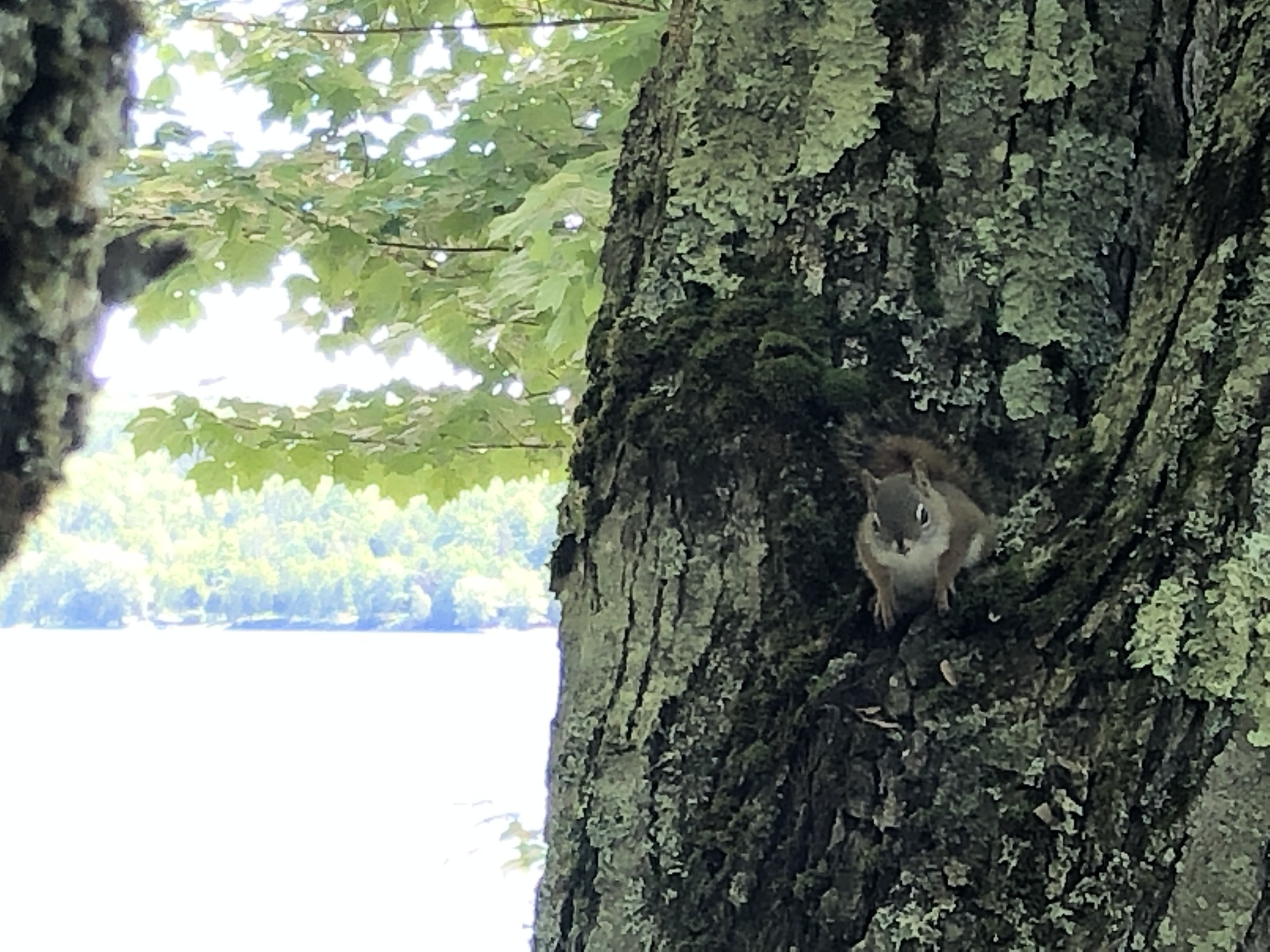 squirrel perched in a tree looking at the camera